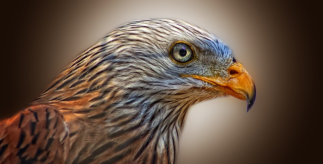 Free photo: Red Kite, Bird Of Prey, Milan - Free Image on ...